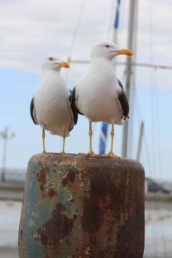 Close-up of seagulls perching on metal