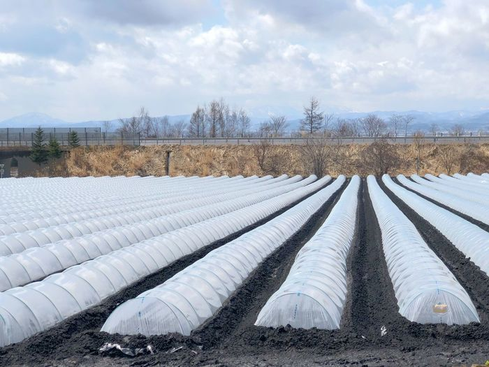 Agricultural by organic system Agriculture Farm Farm Photos Farm Equipment Farming Equipment Agricultural Land Plastic Hoop Agricultural Field Sky Cloud - Sky Day Nature Snow Winter No People