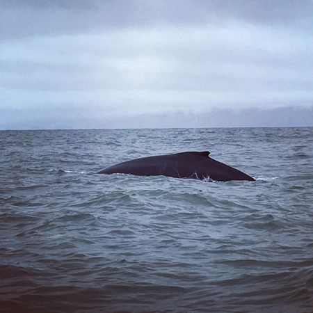Whale Sea Horizon Over Water Animals In The Wild Beauty In Nature Aquatic Mammal Water Sea Life Mammal Cloud - Sky Sky Baleines Ballena Animal Huge Impressive Mom And Baby Close Costa Rica Pacific Ocean Puntarenas Pacific Coast Central America