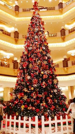 Christmas Tree Christmas Tree!