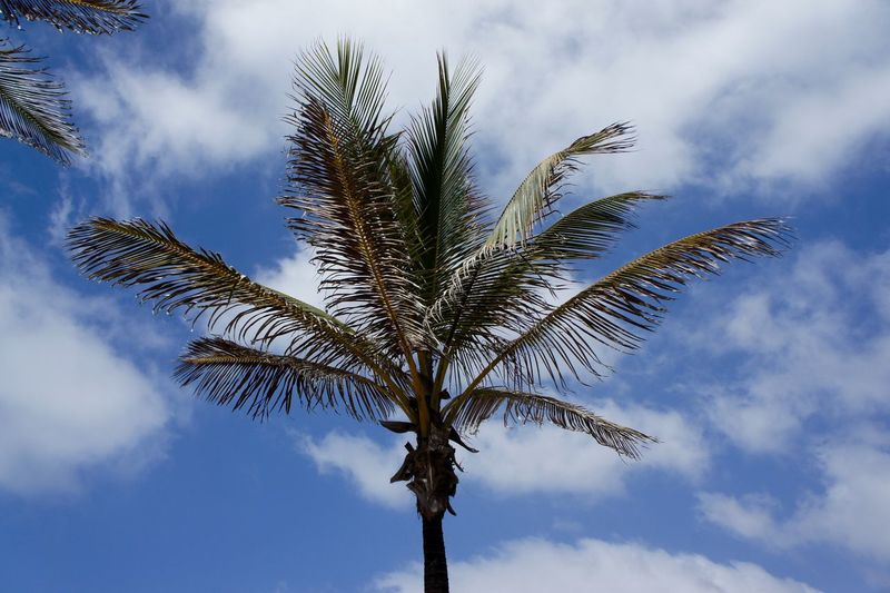 Art Sky Beauty In Nature Close-up Cloud - Sky Day EyeEmNewHere Growth Leasure Time Low Angle View Nature No People Outdoors Palm Tree Scenics Sky Spain🇪🇸 Tree Treetop