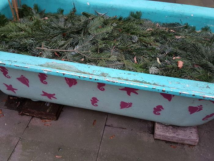Bathtube Bath Tub Bathtub With Fir Branches Fir Branches Fir Branches In Bath Tub Old Bath Tub Funky Quaint  Funny Bath Tub