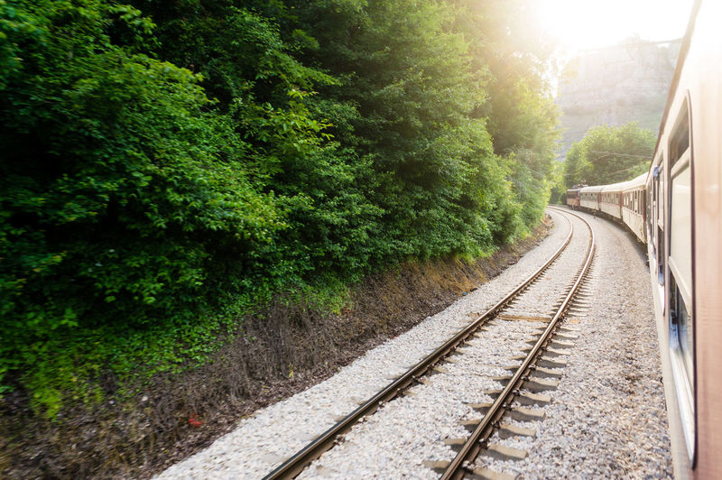 View Of Railway Tracks Along Trees