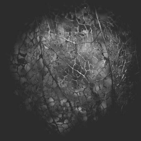 strukturen Abstract Backgrounds Close-up Dark Decay Deterioration Fugacity Full Frame Growth Natural Pattern Nature Plant Selective Focus Structure Tranquility Vignette Wabi-sabi Wabisabi