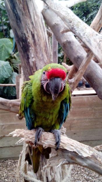 Peroquet Nature Zoo Animals  One Animal Bird Photography