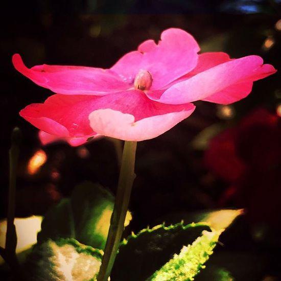 Artofphoto Fotofanatics_flowers_ Flower_sultans Flowersandmacro Ptk_flowers Bd_flower Flowerstyles_gf Loves_flowers Great_captures_nature Ig_addicts Ig_exquisite Fotocatchers Natura_love Splendid_flowers Garden_explorers_ Hppyflwrs Ig_today Flower_daily Floral_secrets Flowerstalking Ig_naturegallery FS_Dark Quintaflower My_daily_flower Topfleur IGSCFLOWERS garden_styles instagardenloversrsa_nature_flowers