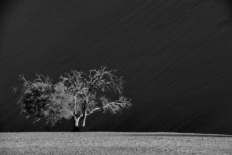 Black & White Black And White Photography Blackandwhite Landscape Landscape_Collection Landscape_photography No People Scenery Scenic Scenic Landscapes Solitary Tree