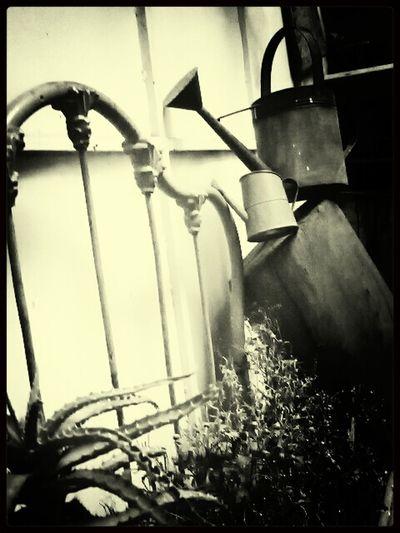 props d ciro luis d lacruz locasion casa d ciro luis de la cruz...