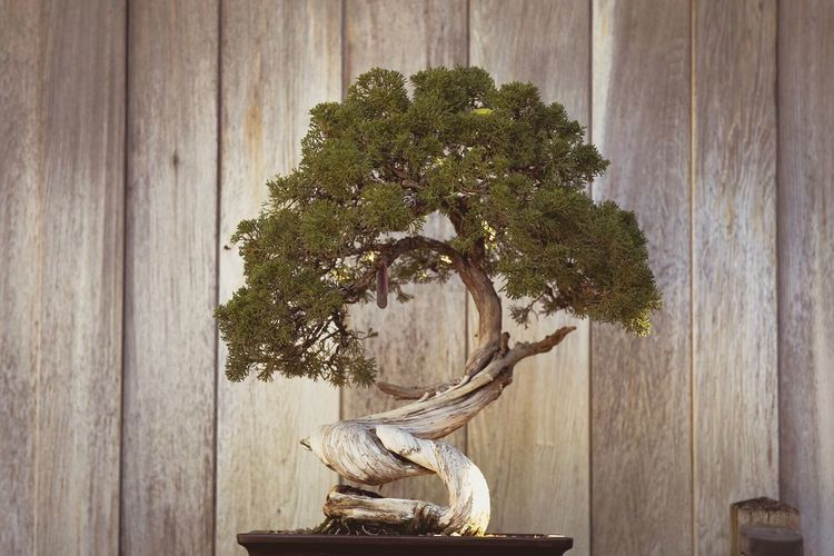 Tree Wood - Material No People Day Nature Statue Growth Tree Trunk Sculpture Indoors  Beauty In Nature Close-up Bonsai Tree Faded Garden Freshness