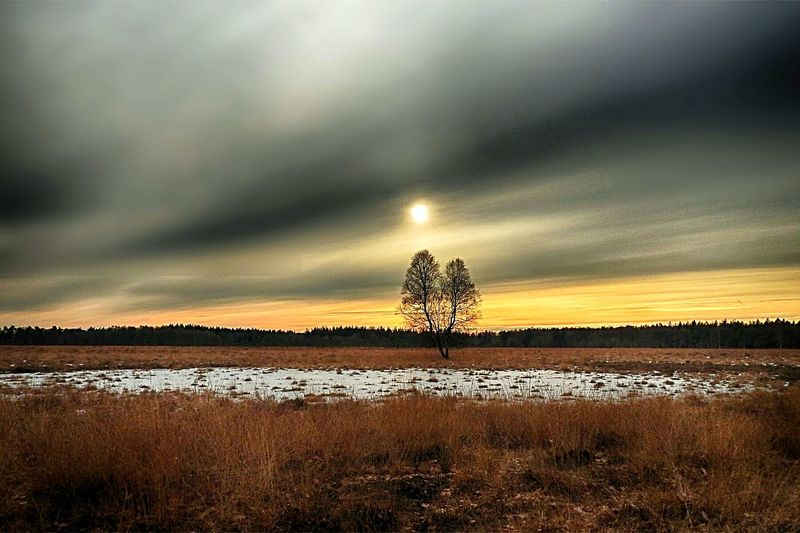 Drenthe Sunset_collection Sky_collection Sun_collection Tranquil Scene Beauty In Nature Dramatic Sky Tranquility Landscape Beauty In Nature Winter EyeEm Nature Lover Nature_collection Wintertime Treetastic Sunset Sunset Collection Eye4photography  Peace And Quiet Beautiful Nature
