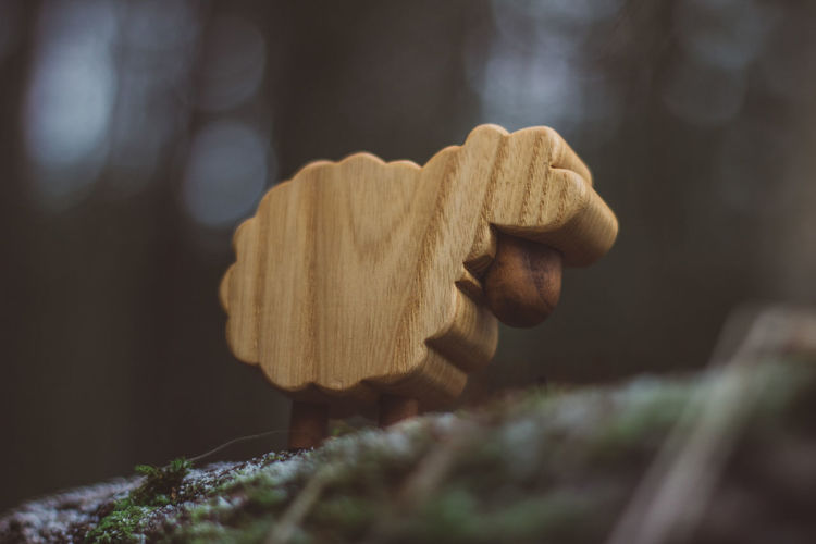 Lamb Toy Toys Wood Wood - Material Forest Nature Wooden Toys Autumn Summer Winter Close-up Selective Focus Fungus Food Mushroom Vegetable No People Focus On Foreground Food And Drink Day Plant Growth Toadstool Beauty In Nature Freshness Land Outdoors