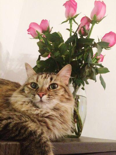 Lindas, no??? Cat Cat Lovers Peludodeamor Rosasrosas