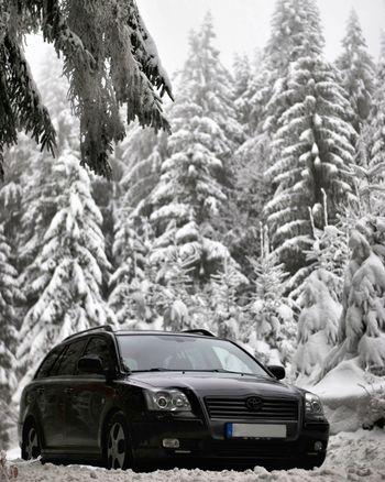 Winter Snow Car Nature Tree Forest Toyota Avensis T25