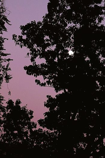 Moon Moon Light