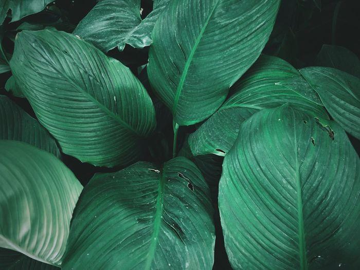 Leaf of life,