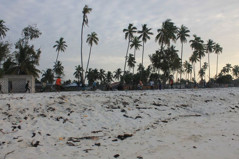 Zanzibar Africa African People African Beach Football Football Players Football On The Beach Sand Palm Trees Seaside Palm Tree Tranquil Scene Tree Scenics Tranquility Nature Tall - High Non-urban Scene Coconut Palm Tree Sky Tree Trunk Solitude Tourism Travel Destinations Surface Level Beauty In Nature Growth Cloud