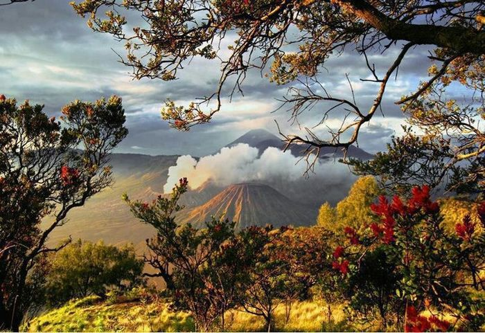 Blossoming Around Bromo Volcano,Indonesia