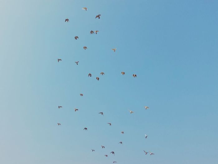 Low Angle View Of Flock Of Birds In Sky