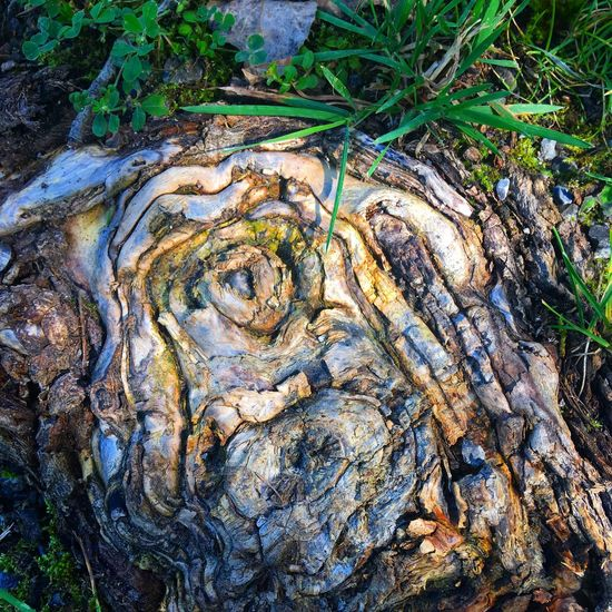 Baumstumpf Baumstumpf Nature Outdoors No People Day High Angle View Growth Tree Textured  Tree Trunk Plant Grass Beauty In Nature Close-up