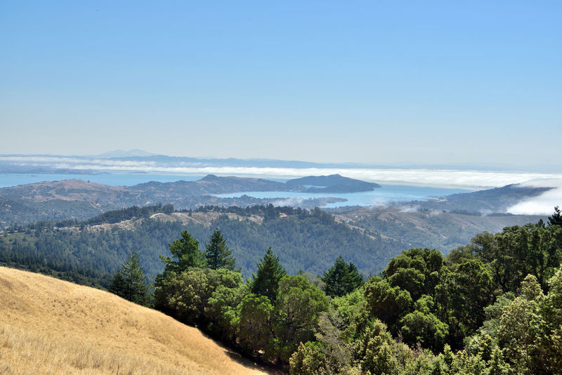 Mount Tamalpais State Park 16 Hiking Mt. Tam Hiking Adventures Hiking ❤️ Mount Tamalpais State Park Ele: 2,576 Feet Highest Peak Of The Marin Hills Covers 25,000 Acres 21 Trails More Than 50 Miles Of Hiking/biking Trails Nature Nature_collection Beauty In Nature Landscape_Collection Landscape_photography San Francisco Bay Marine Layers! Fog Evergreens Golden Brown Hills Mount Diablo Tree Mountain Forest Pinaceae Rural Scene Pine Tree Sky Foggy Mountain Peak Mountain Ridge The Great Outdoors - 2018 EyeEm Awards