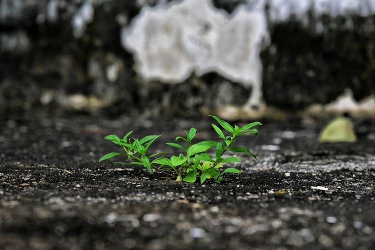 Plant Leaf Close-up No People Growth Nature Green Color Day Outdoors Fragility Beauty In Nature Freshness