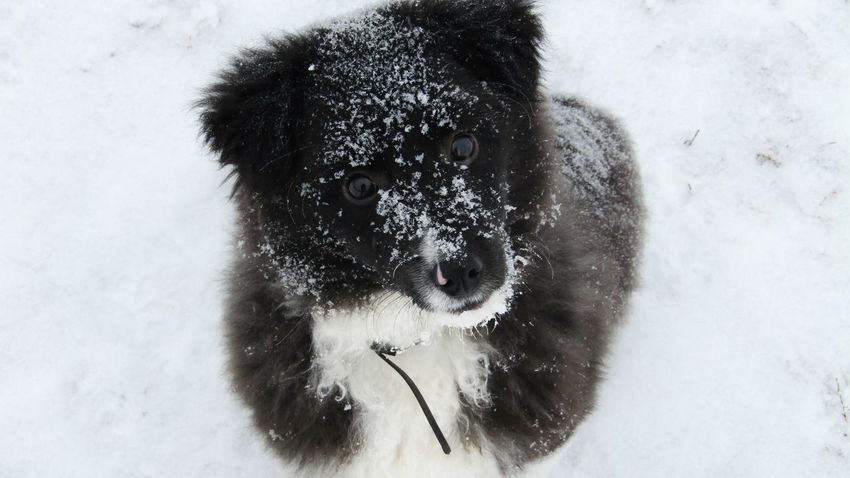 No People Snow Day Winter Frozen Nature Beauty In Nature Cold Temperature White Color Dog Animal