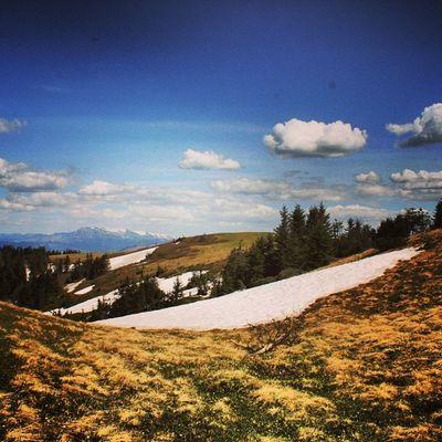 Arşiv Artvin Manzara Keyif huzurdogalyayla Kayak merkezinin en tepesi ? adını unuttum yav yine ?