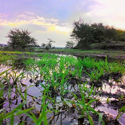 Beautifulscenery Grass Water HDR Trees Clouds Repostingindia Landscape Summer Instadaily Instagood Photooftheday Instapic 1000thingstodoinindia India Ig_india Zenreflection Zenfone Ig_maharashtra