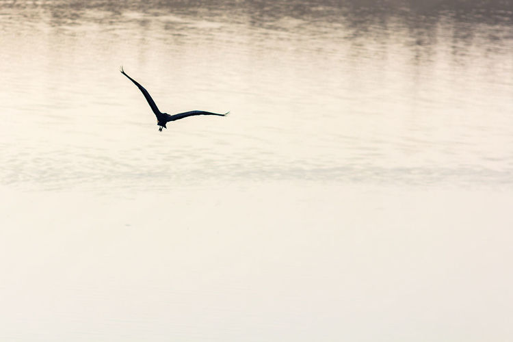 Animal Themes Animal Wildlife Animals In The Wild Beauty In Nature Bird Day Flying Nature No People One Animal Outdoors Scenics Sea Silhouette Spread Wings Water Waterfront