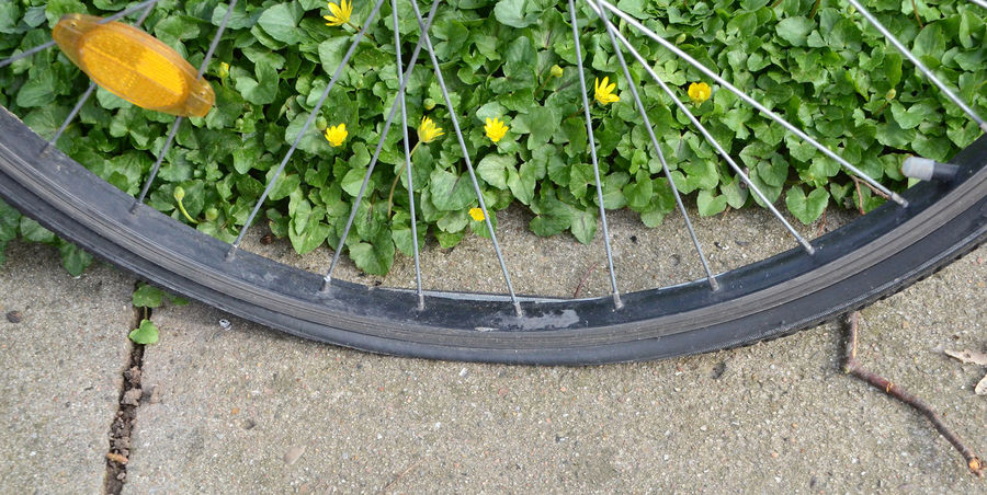 Flat bicycle tire Transportation Wheel Bicycle Close-up Day Flat Glass Fragments Growth High Angle View No Air No People Outdoors Plant Puncture Rubber Sharp Stone Tire Tyre