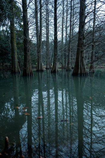 Japan Eye Em Nature Lover Eye Em Best Shots - Nature Reflection Trees