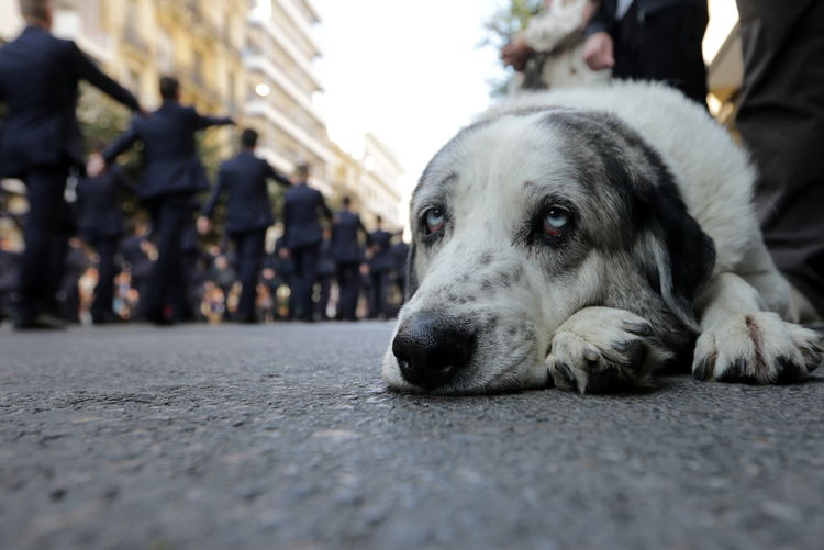 Close-up portrait of dog relaxing on street in city