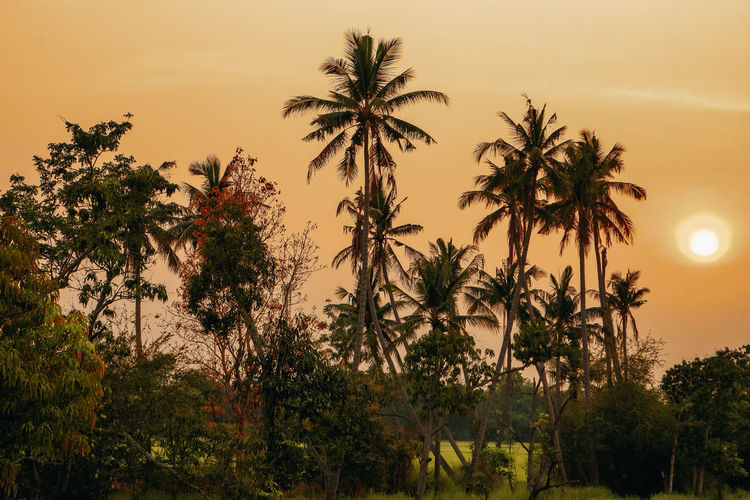 Low angle view of coconut palm trees against sky during sunset