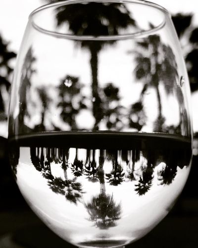 This drink will make you feel coco'nuts. I call it, The Palm Close-up No People Day Outdoors Glass Wine Blackandwhite Reflection EyeEm Kris Slater Wineglass Palm Tree Abstract Wine Not