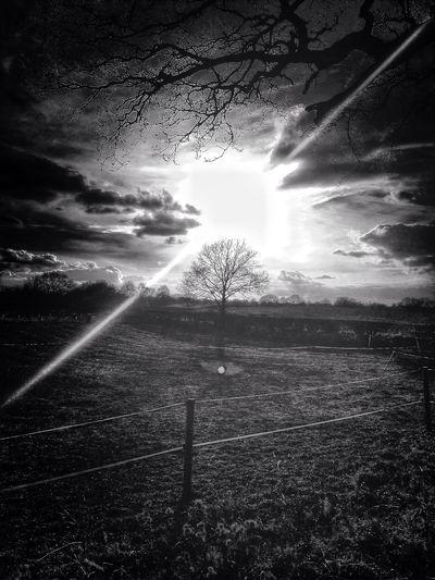 Sunset Tree Landscape Black And White
