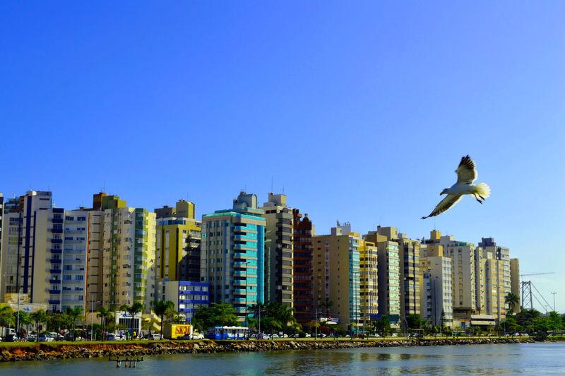 Beira Mar de Floripa! Architecture Beira Mar De Florian Bird Blue City Flying Water