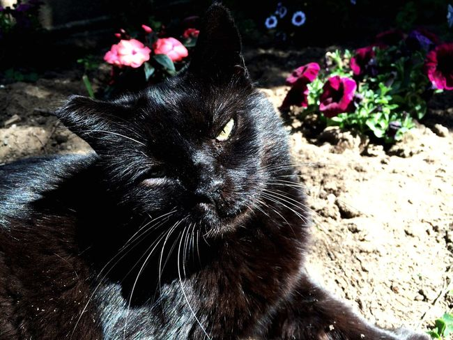 Fujifilm Pets Gatti Catsofinstagram Cats Of EyeEm Animals BLackCat Cute Cats Gatto Cat