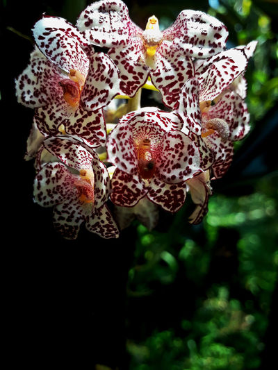 EyeEmNewHere Orchids Beauty In Nature Flower Growth Nature No People Outdoors