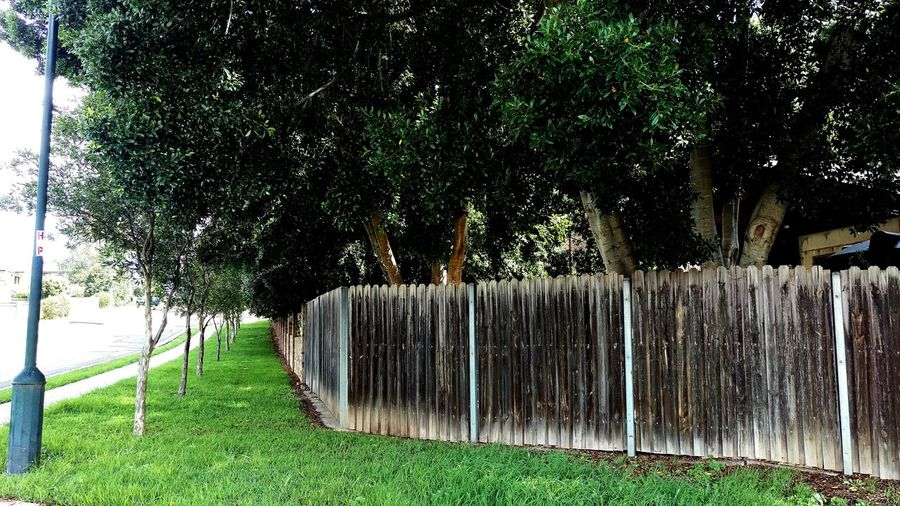 Trees Green Grass