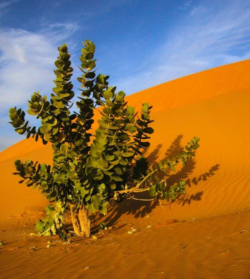 Arid Climate Beauty In Nature Cloud - Sky Day Desert Growth Landscape Nature No People Outdoors Plant Sahara Scenics Sky Sunlight Tranquility Tree
