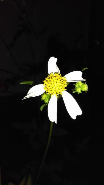 Daisy Daisy Flower Taking Photos Fresh Flowers Spring Flowers Nature Photography Spring Bloom Wedding Photography Outdoor Photography Freshflowers Sexyness Flowers Nature Spring Blooms Pretty Flower Check This Out Enjoying Life