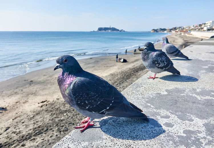 Animal Themes Animal Wildlife Animals In The Wild Beach Bird Day Ocean Outdoors People Sea Three Animals Water