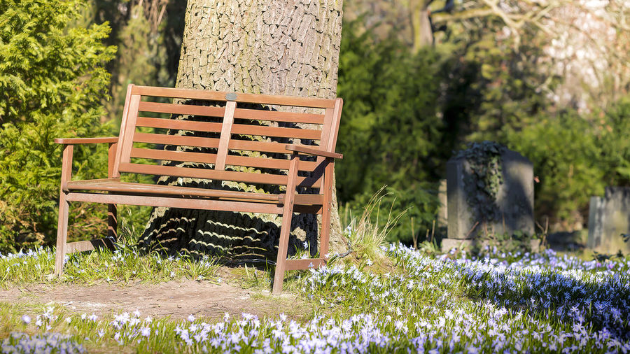 Flower Spring Springtime Season  Easter Nature Bud Blossom Outdoors Bench Rest Relaxing Plant Flowering Plant Seat Tree Wood - Material Growth Chair Trunk Tree Trunk Day Grass Empty No People Beauty In Nature Park Absence Park Bench Flowerbed