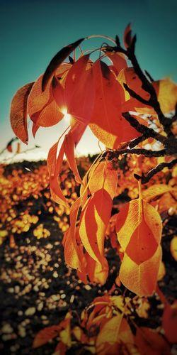 Close-up of orange leaves on plant against sky