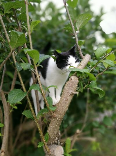 One Animal Animal Themes Domestic Cat Tree Branch Leaf Cat Domestic Animals Nature Selective Focus Pets Day