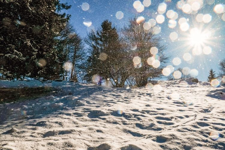 Glittery. Snow Lens Flare Tree Winter Night Nature Cold Temperature Outdoors Illuminated Landscape No People Sky Beauty In Nature