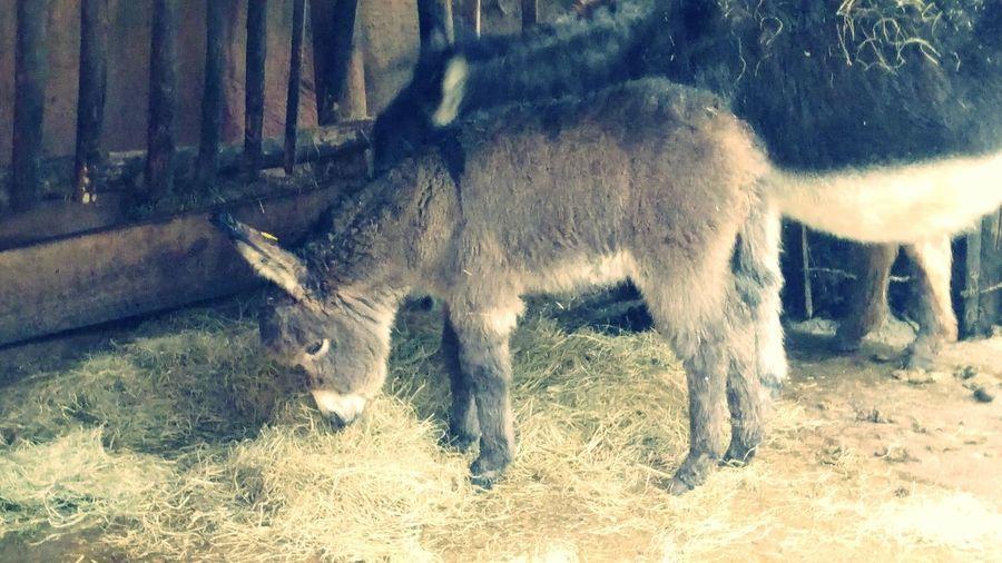 Charlie Dierenpark Amersfoort Donkey Ezel