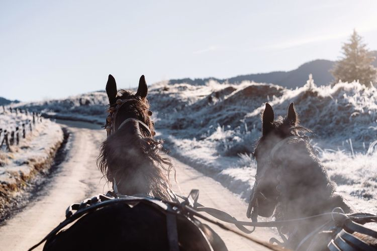View of horse cart and horses on country road in winter