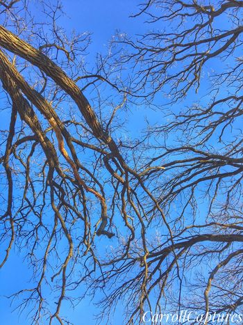 Branch. No. Leaves. Low Angle View Tree Branch Nature Sky Bare Tree Outdoors