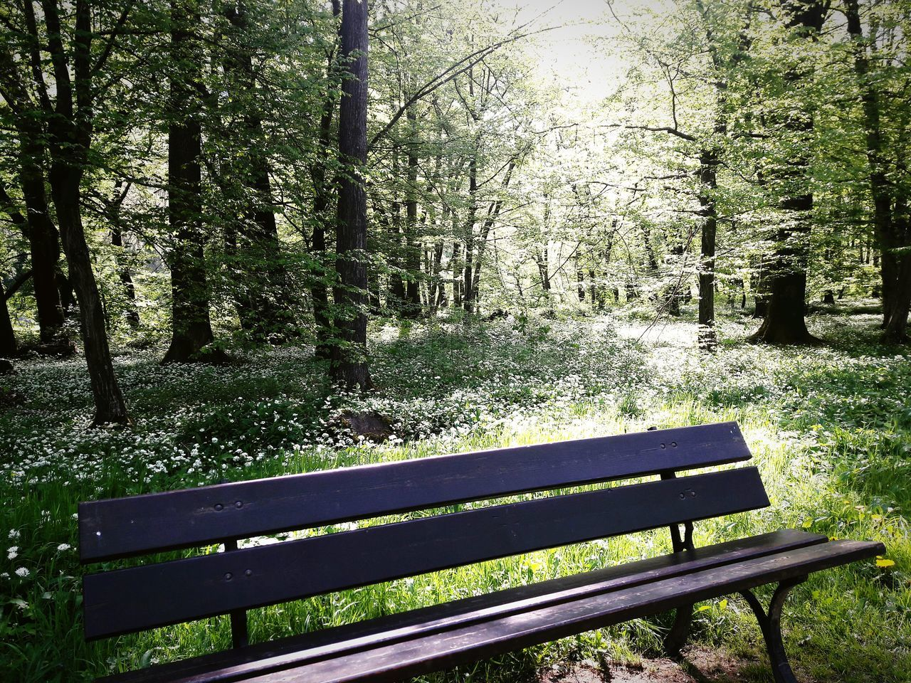 tree, nature, empty, tranquility, day, tranquil scene, forest, landscape, no people, growth, scenics, beauty in nature, outdoors, grass